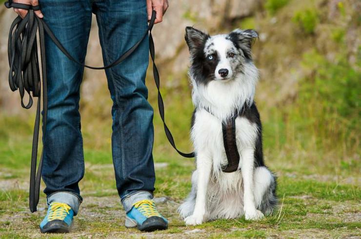 Общие принципы воспитания и дрессировки собаки
