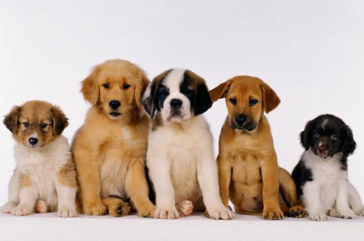 Как правильно выбрать щенка