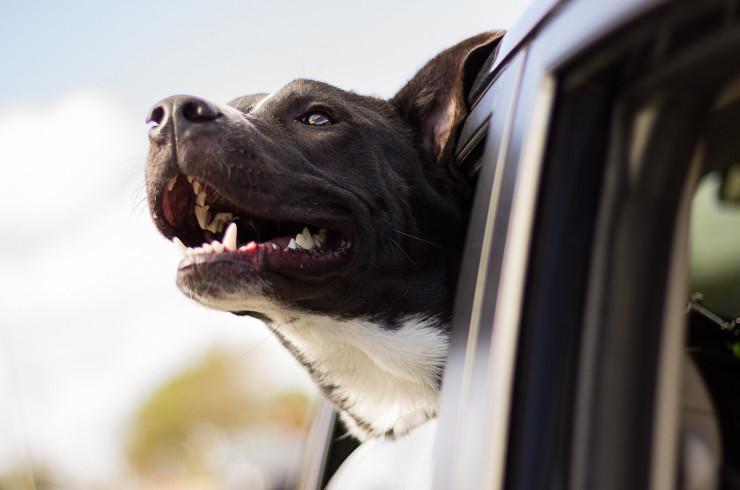 10 заповедей собаковода, или как стать идеальным хозяином для четвероногого друга