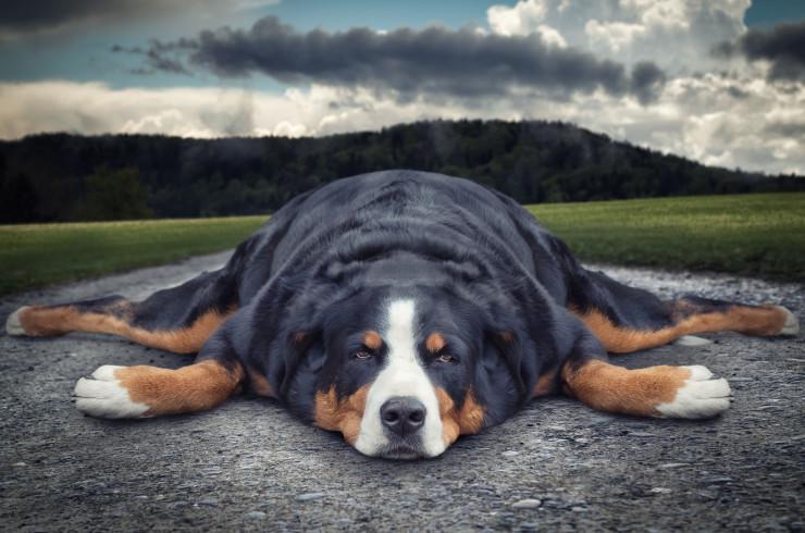 Почему собака может игнорировать команды