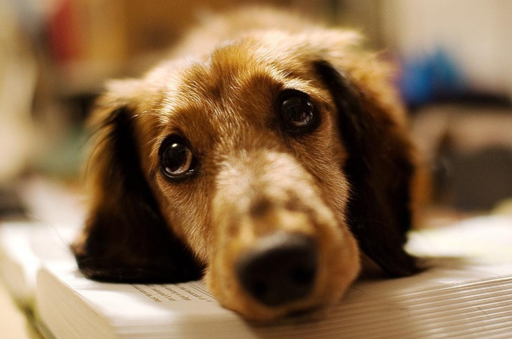 Молчаливая собака