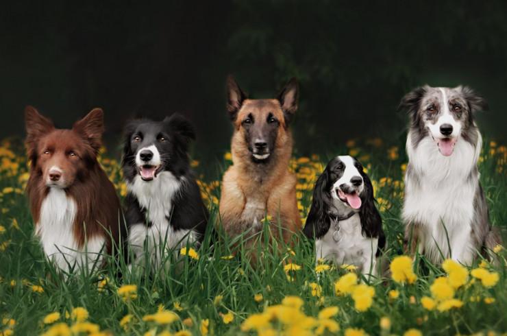 Выбор породы: собака какого размера подойдет вам