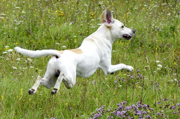Как научить собаку не реагировать на внешние раздражители