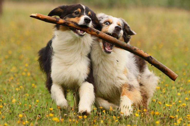 Выбор породы: интеллект, характер и активность собаки
