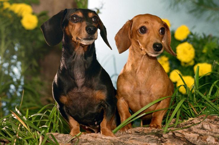 Выбор породы: предназначение собаки