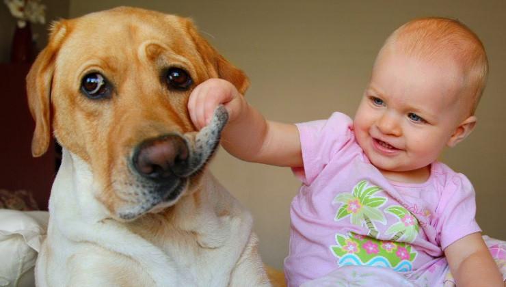 Собака и ребёнок