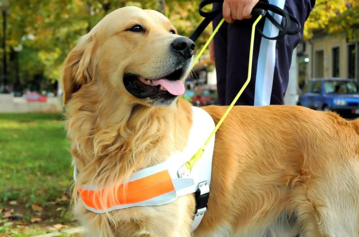 10 видов собак помощников и что они делают