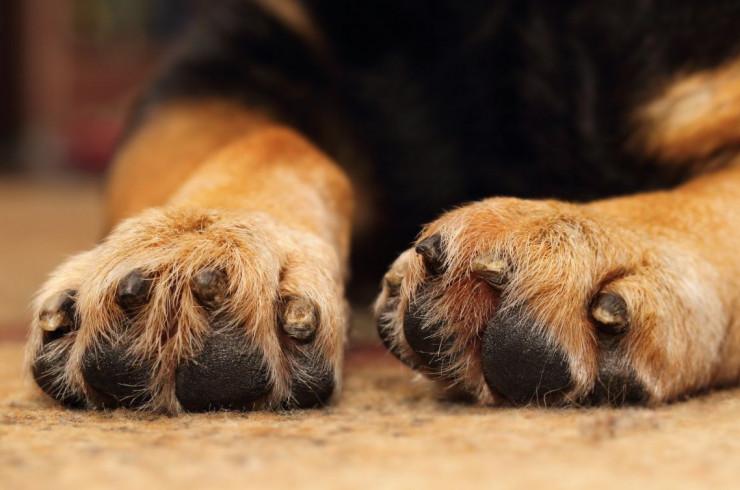 Как бороться с грязными лапами у собак