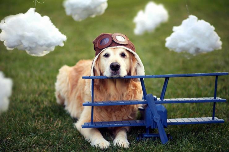 Что нужно знать при перелётах с собакой