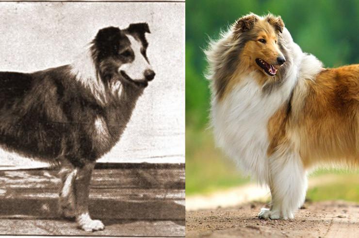 Как сегодня меняются породы собак из-за моды и почему это плохо