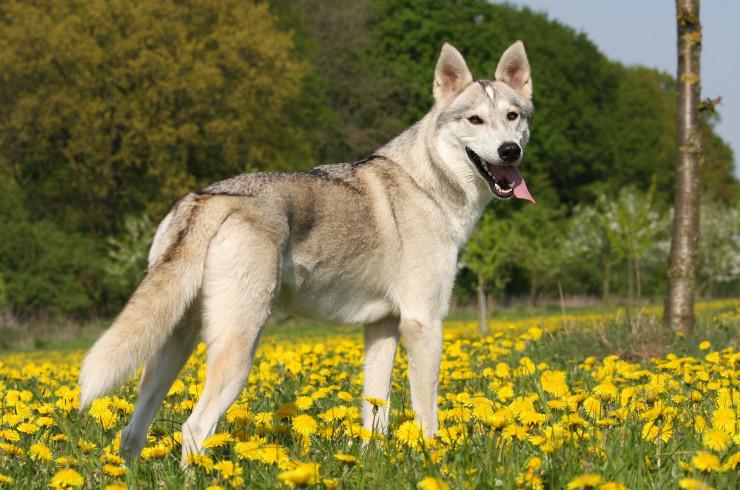 Собака и лето. Как ухаживать за собакой в жару