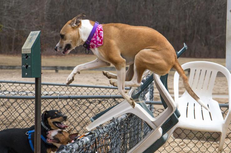 Собака убегает со двора