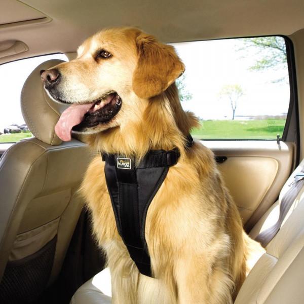 Ремень для собаки в машину
