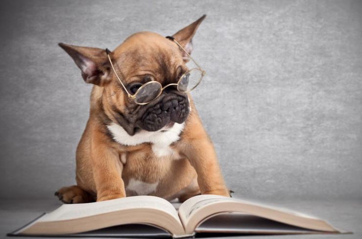 Сколько слов понимает собака