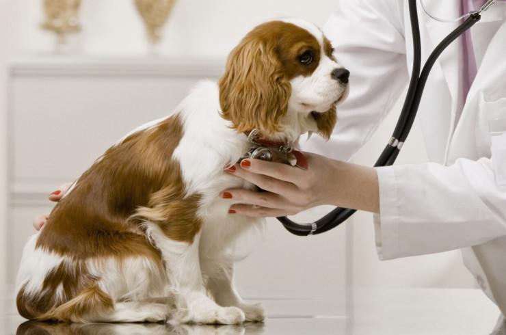 Чем может и не может заболеть ваша собака