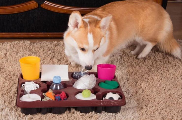 Развивающие игры для собак своими руками