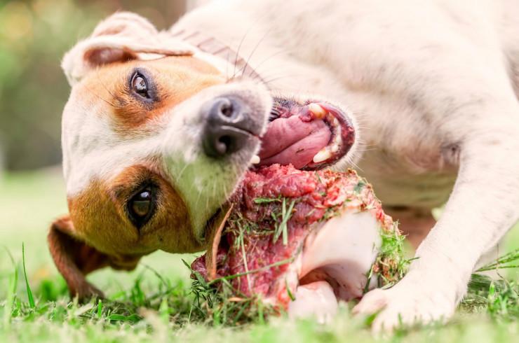 Можно ли собаке сырое