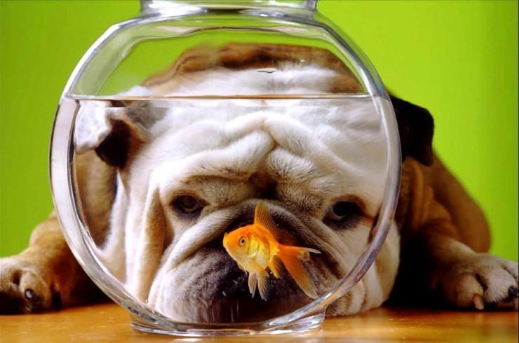 Можно ли собакам рыбу и уху