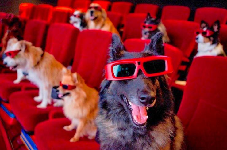 Собаки актёры