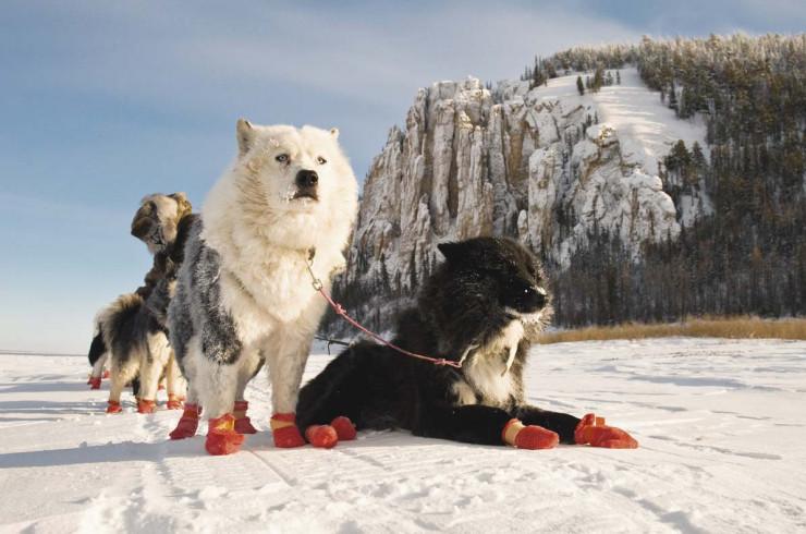 Новости про собак за неделю. Выпуск №3