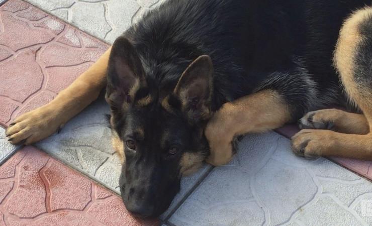В Чернигове суд признал щенка виновным в нападении