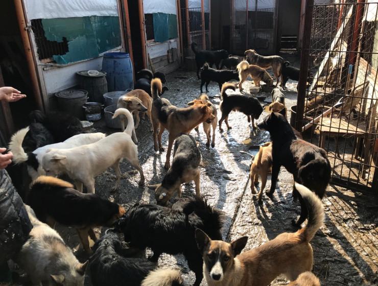 """Курские зоозащитники обнаружили """"собачий концлагерь"""""""