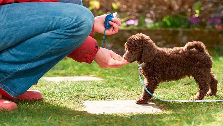 обучение щенка с кликером