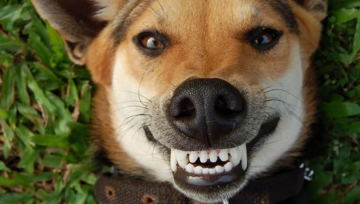 Здоровые зубы и свежее дыхание