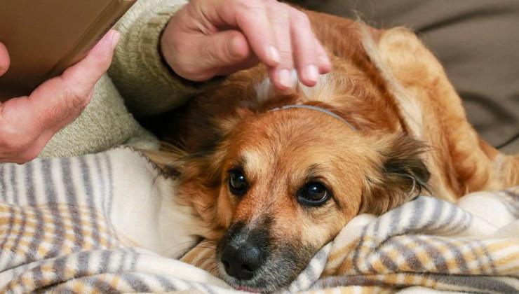 О коронавирусе владельцу собаке