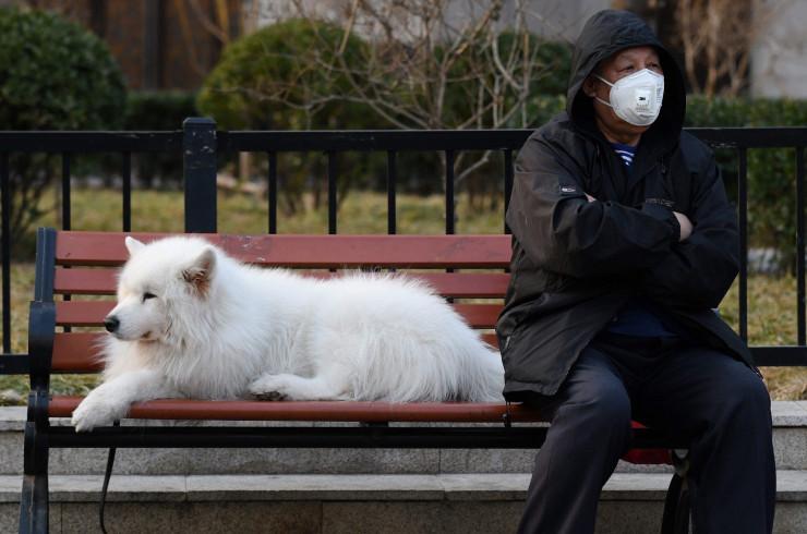 Может ли собака заболеть и заразить коронавирусом