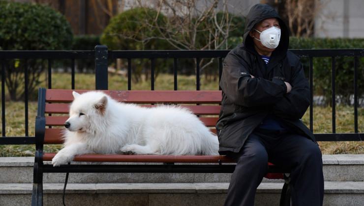 Собаки в эпидемию