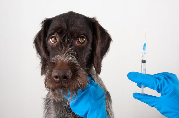 Как правильно сделать укол собаке в холку (подкожно) и в бедро (внутримышечно)