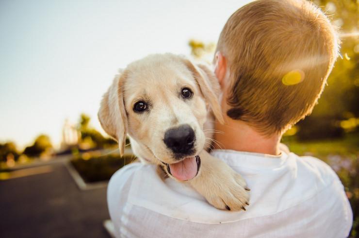 Вакцина от пироплазмоза собак: стоит ли делать «прививку от клеща»?