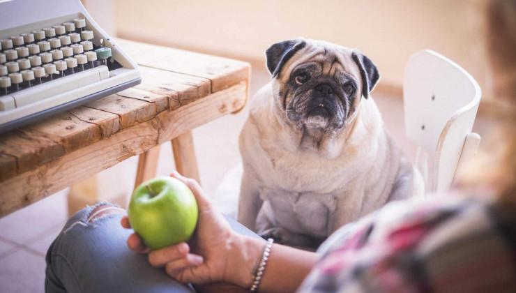 каким собакам противопоказаны яблоки