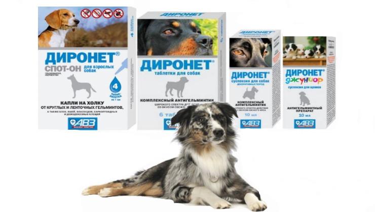 АВЗ диронет для собак