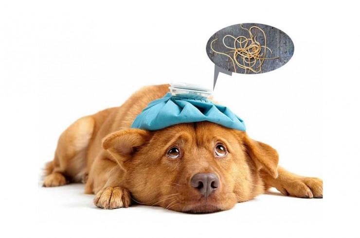 Глисты у собак: виды, симптомы, лечение, схема профилактических обработок, обзор популярных препаратов, цены