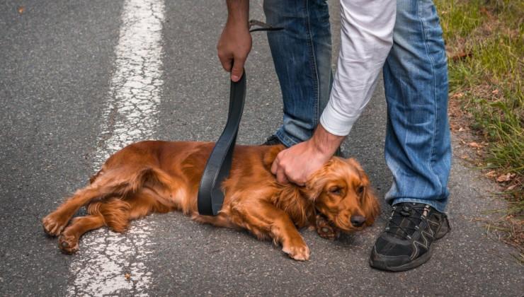 Хозяин бьет собаку