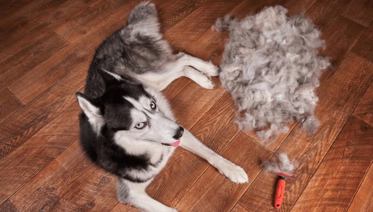 Сезонная линька у собак