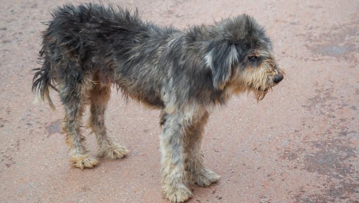 Шерсть - показатель здоровья собаки
