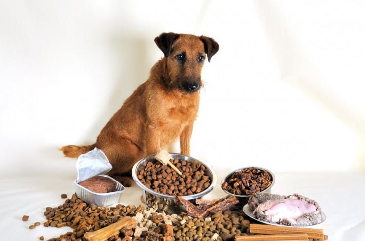Почему собака не ест: причины, что делать, если отказывается от еды?