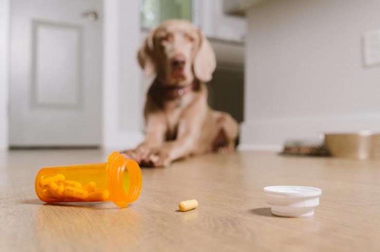 Как дать таблетку собаке: 6 способов