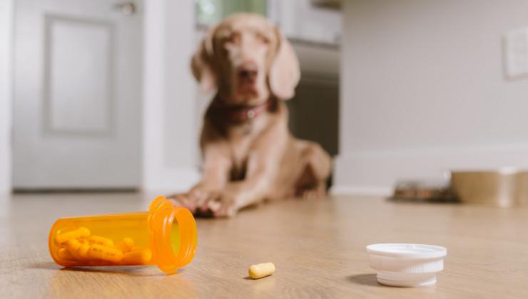 как заставить собаку сьесть таблетку