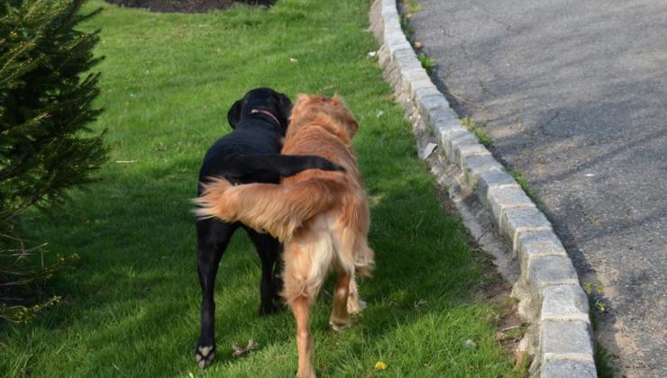 Хвост собаке нужен