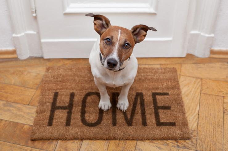 Почему собака метит дома, в квартире: что делать и как отучить
