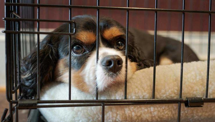 Вольер для собак, которые метят в доме
