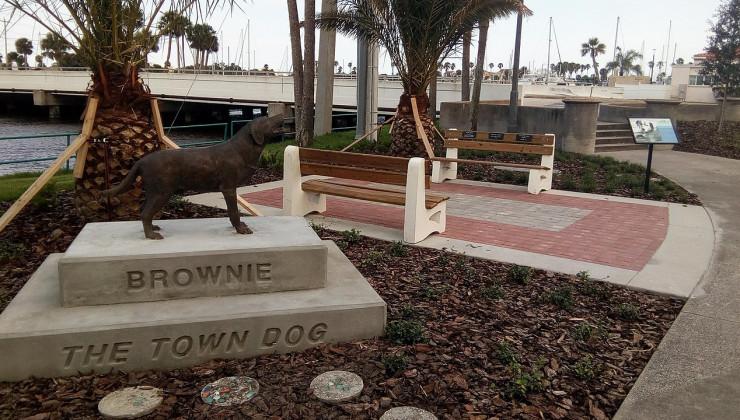Брауни городская собака Дайтон-бич