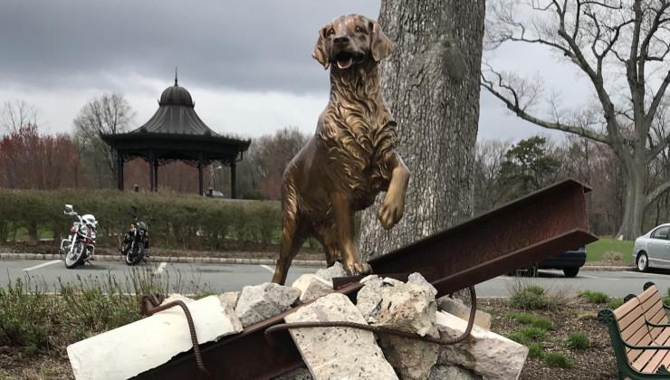 Собака спасатель бретани США