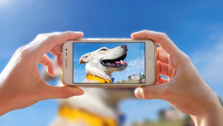 Фото собаки на смартфон