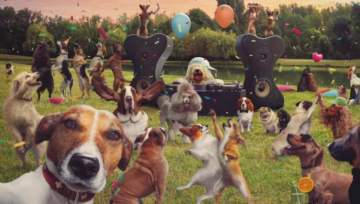 Международный день собак