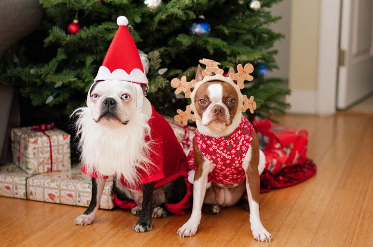 Собачий Новый год